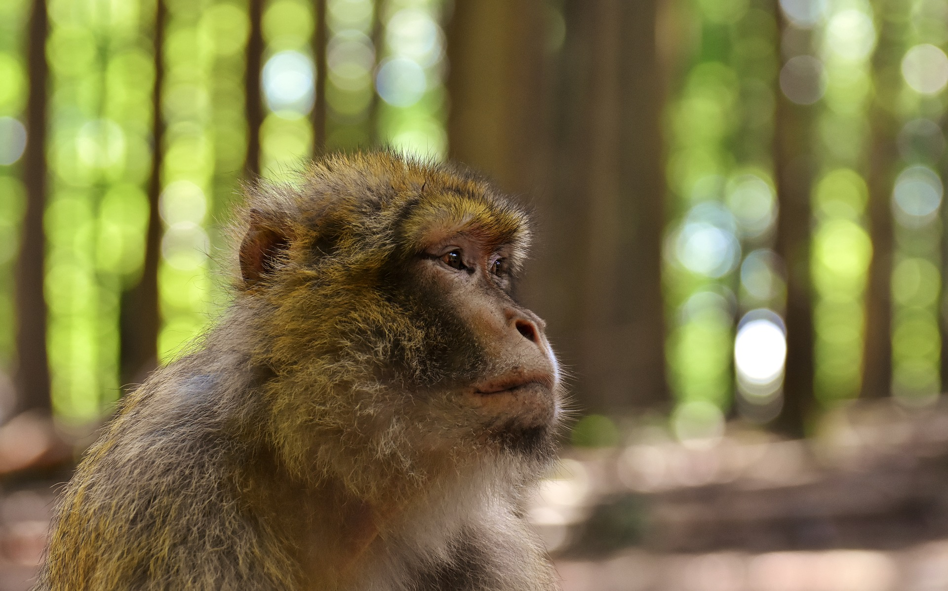 monkey endangered - It's Their Endangered World Too: How Global Warming Has Affected European Wildlife