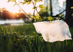 How Plastic Bags Affect Our Lives
