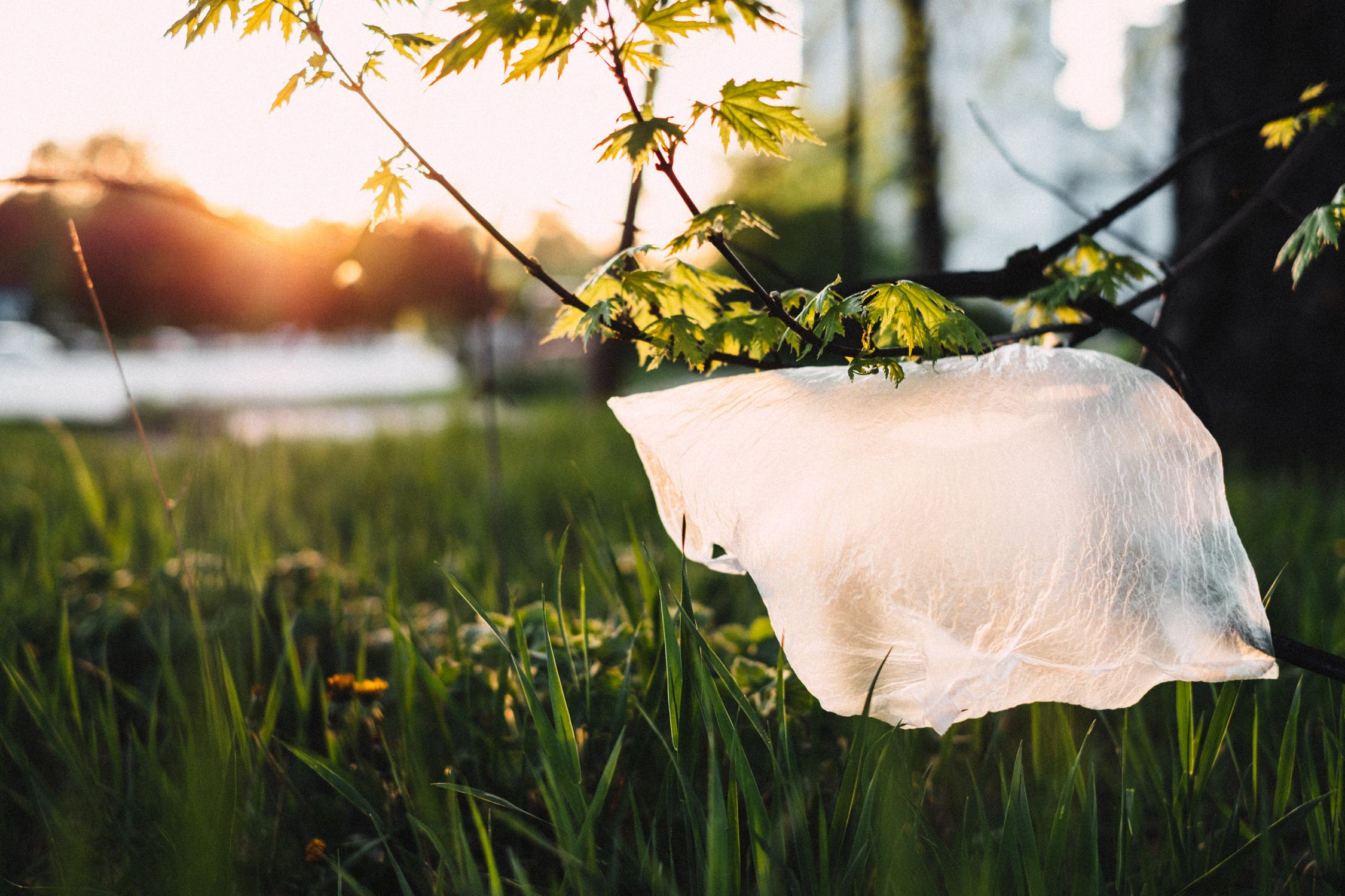 pexels photo 1141835 - How Plastic Bags Affect Our Lives